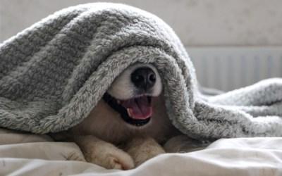 Os principais medos dos cachorros