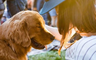 Terapia com cães melhora as habilidades de raciocínio de estudantes universitários estressados