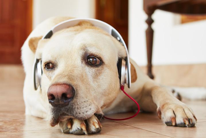 Podcasts sobre o universo pet