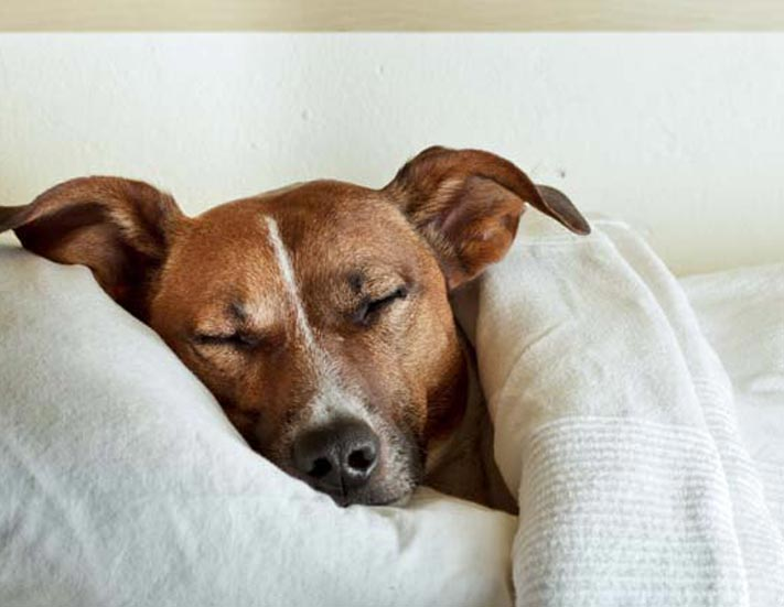 Picture of a dog sleeping