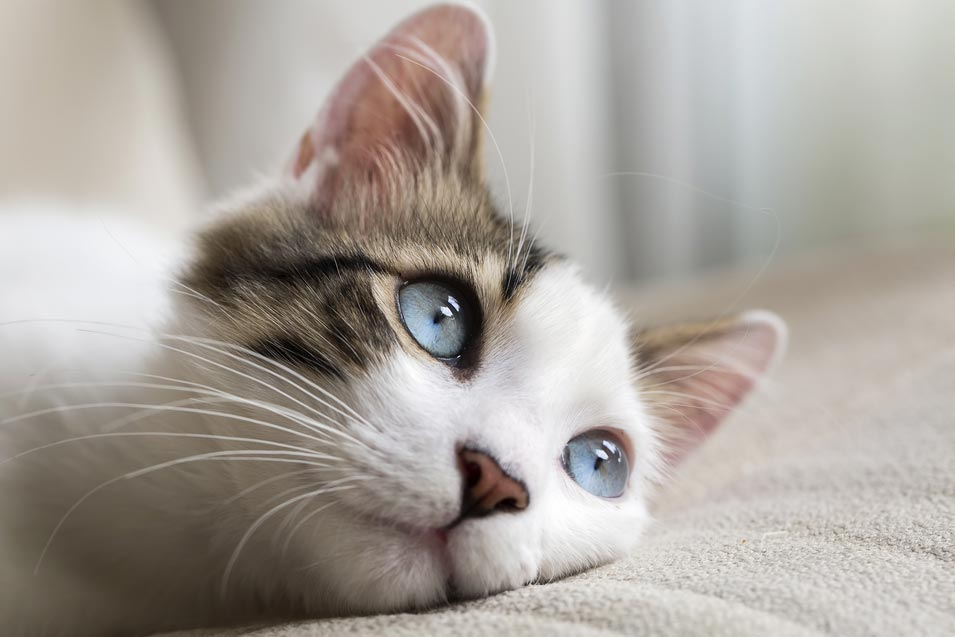 Picture of of a cat relaxing on the sofa