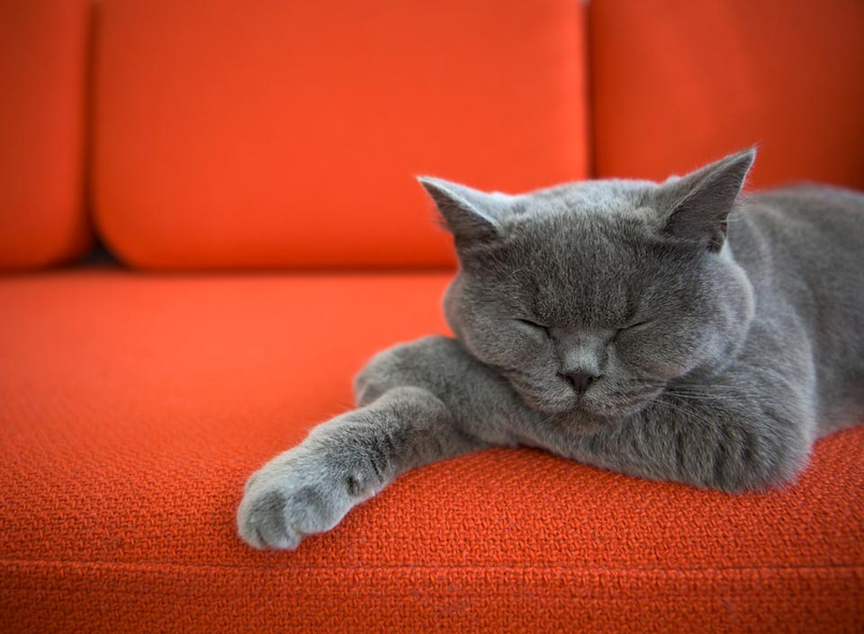 Picture of a cat sleeping on a orange fabric sofa