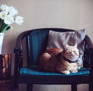 Picture of a cat in a chair