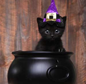 Picture of black cat at Halloween