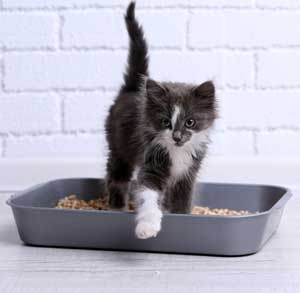 Picture of a kitten in a litter box
