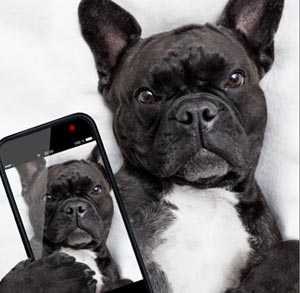 Picture of a dog holding a phone