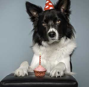 Picture of birthday dog and cupcake