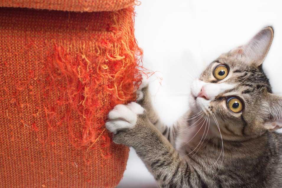 Picture of a cat scratching a orange sofa