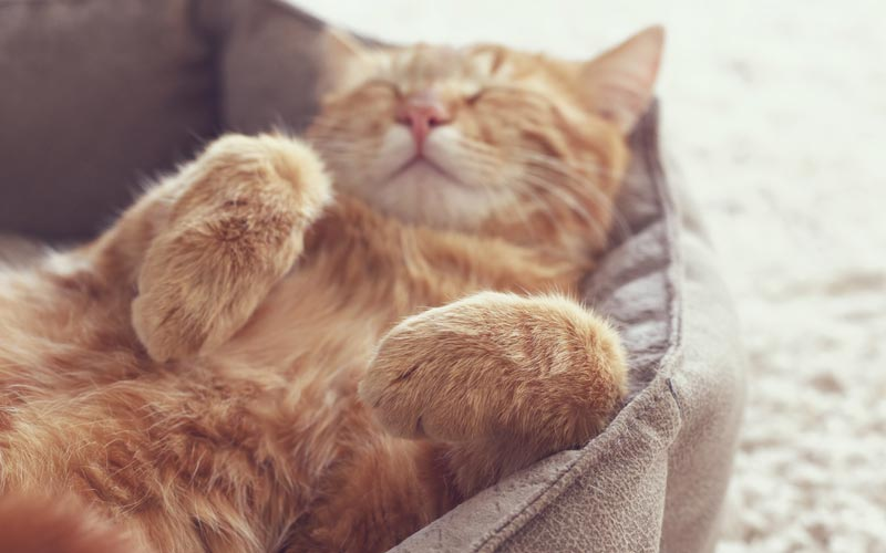 Picture of kitten relaxing on a bed