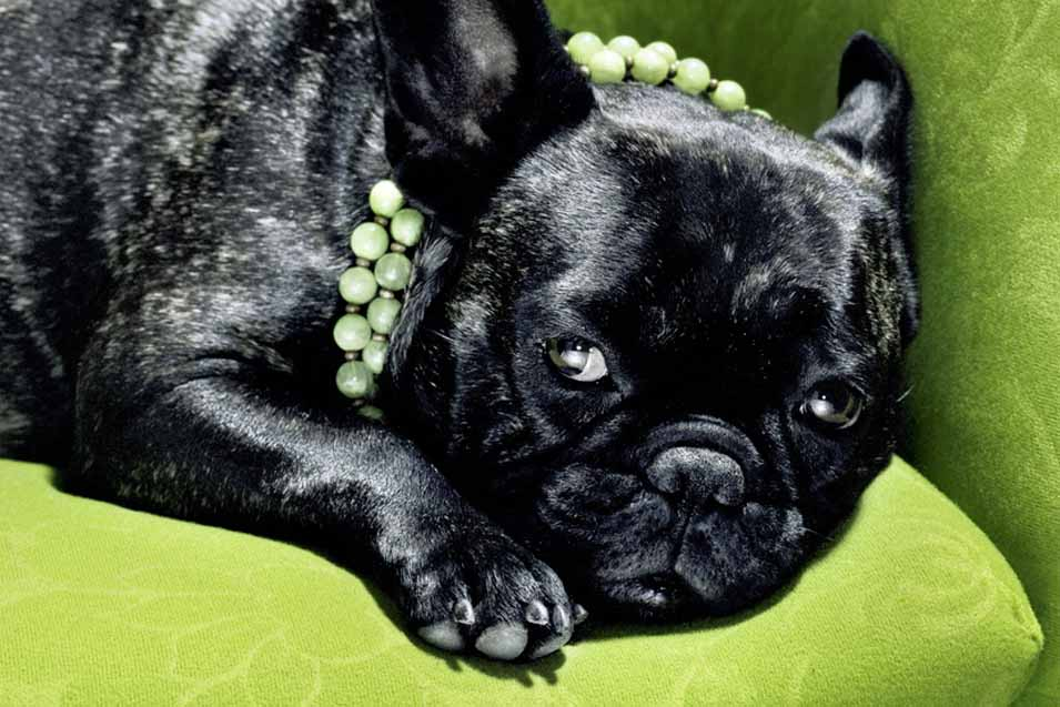 Picture of a dog on a green sofa