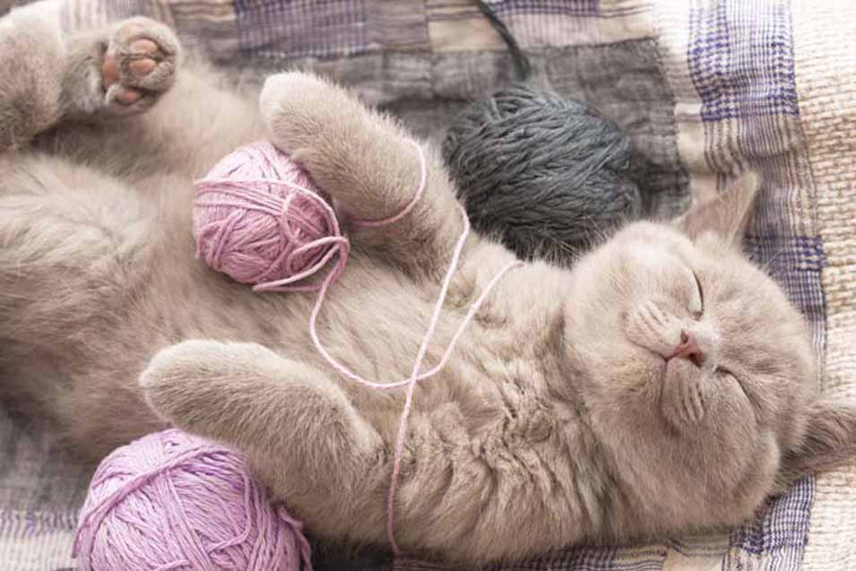Picture of kitten with string balls
