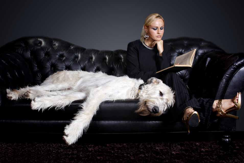 Picture of a Irish Wolfhound on a leather sofa