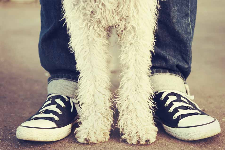 Picture of dogs paws and woman's feet