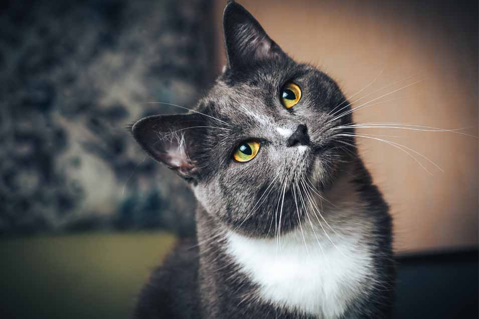 Picture of dark grey cat