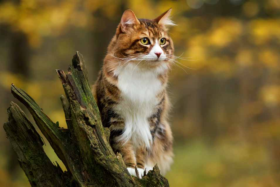 Picture of cat sitting on a tree