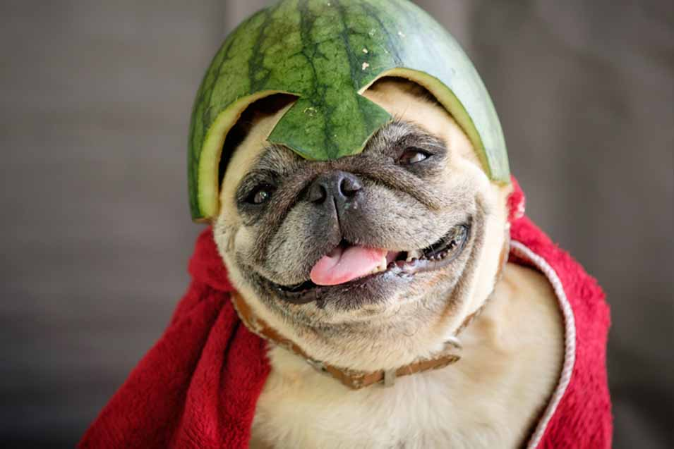 Picture of dog dressed up
