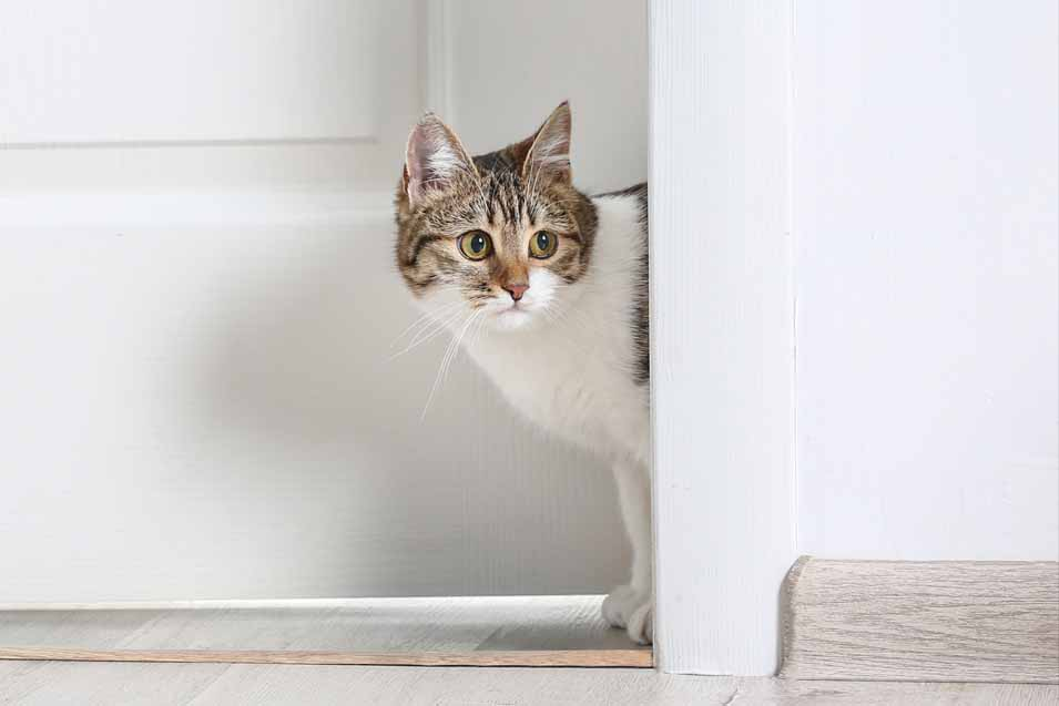 Picture of cat by the door