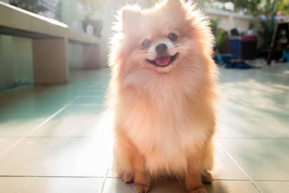 Autoimmune Disease Treatment Dogs