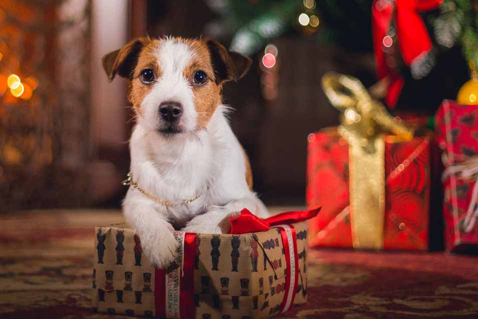 Picture of a dog by the Christmas tree