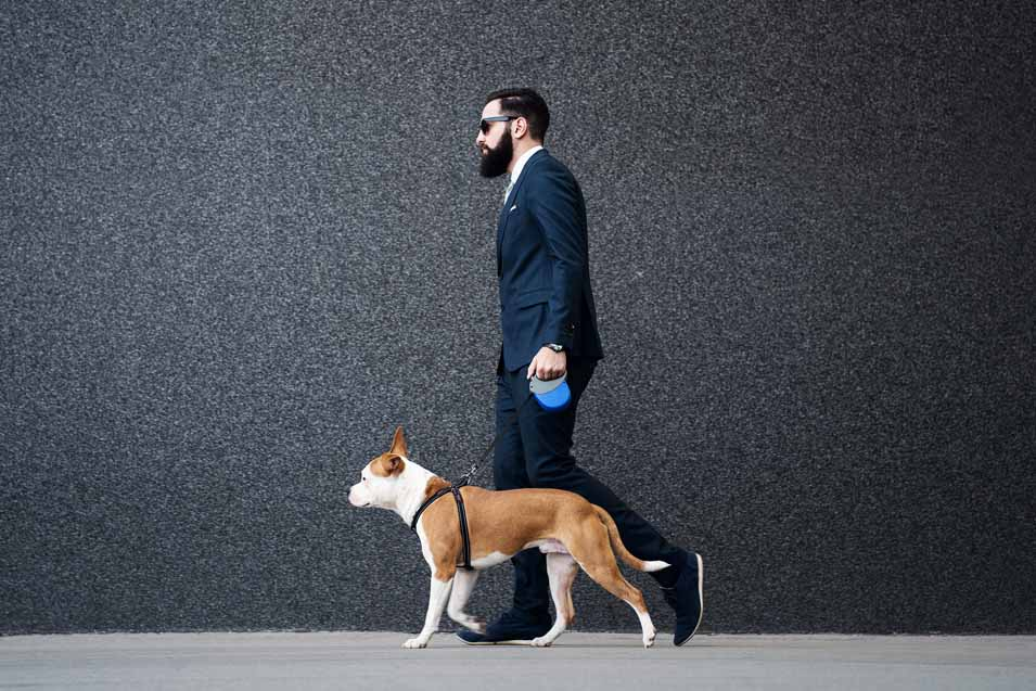 Picture of man in a suit walking a dog