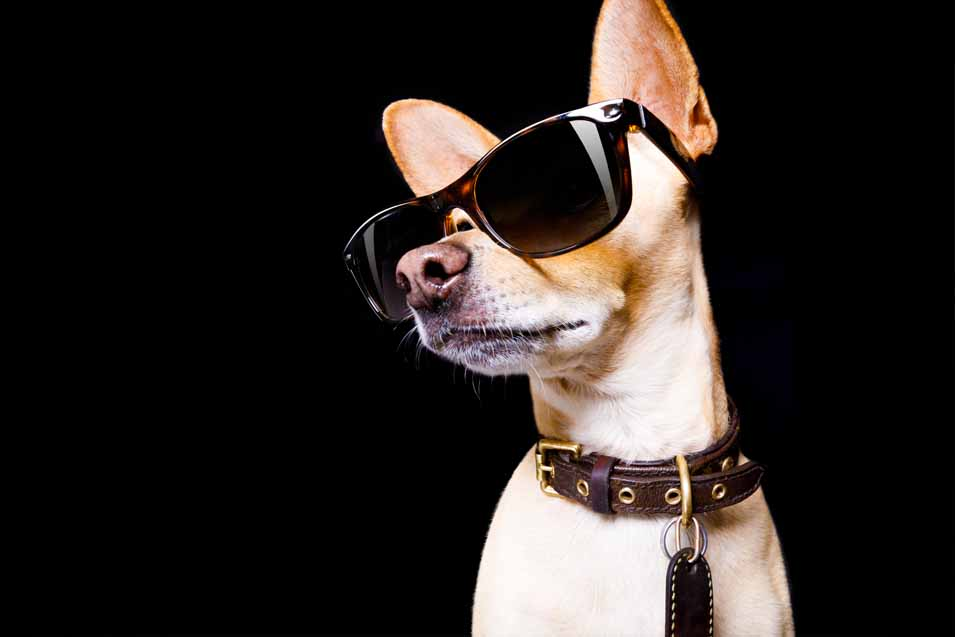 Picture of a movie star dog