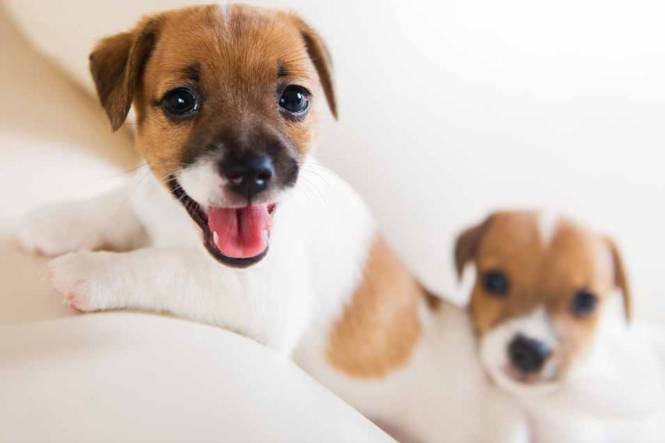 Picture of 2 puppies on a sofa