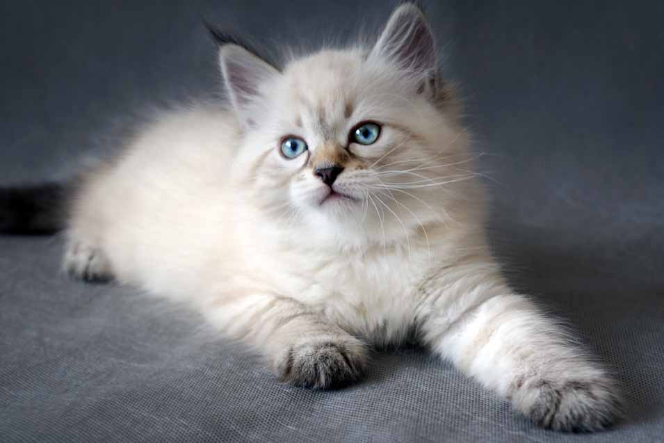 Picture of a kitten at home