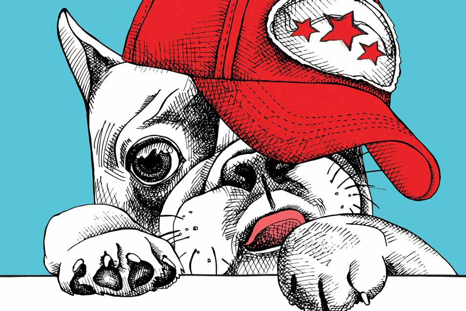 Dog wearing a baseball hat