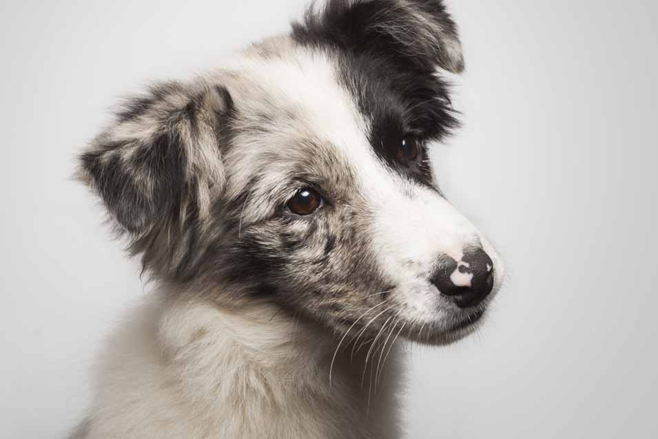 Picture of a cute puppy