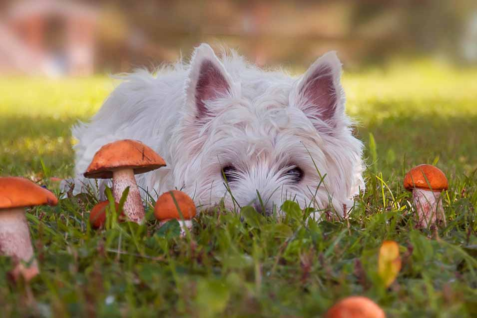Picture of a dog and mushrooms