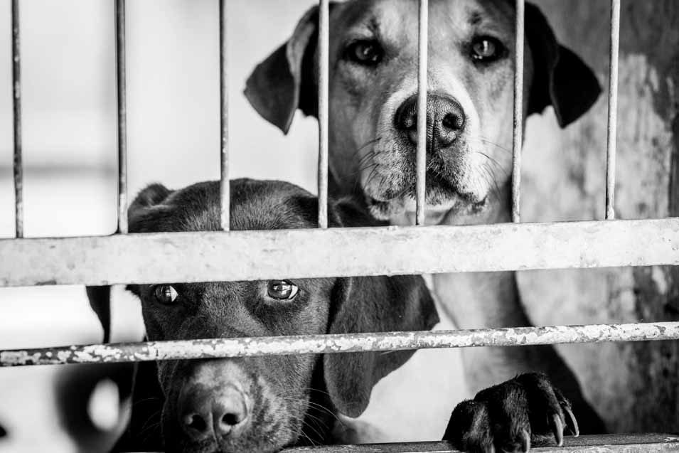 Picture of two dogs an an adoption center