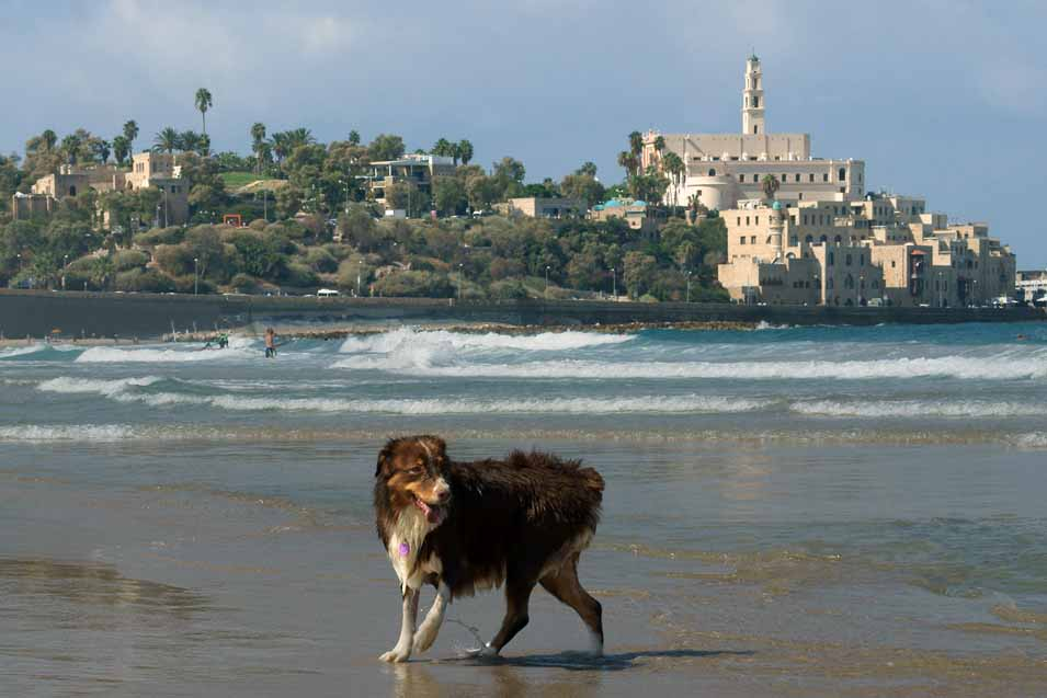 Picture of a dog on the beach in Tel Aviv