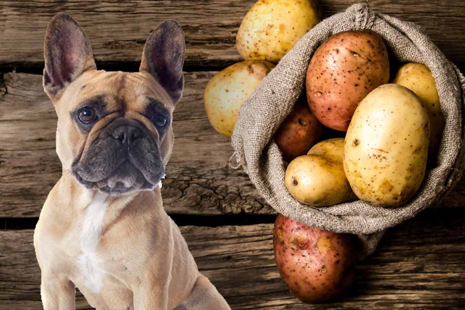 Picture of a dog and potatoes