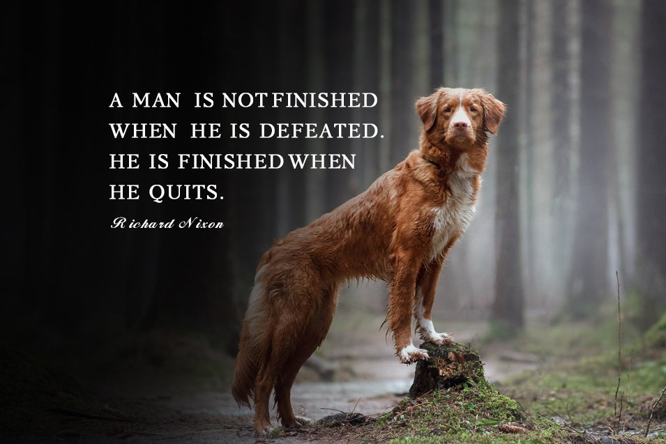 Picture of a Nova Scotia Duck Tolling Retriever in the forest