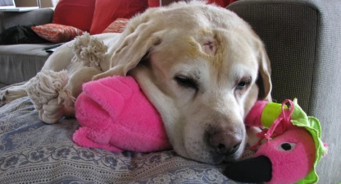 Skin Infections And Loss Of Color Disorders In Dogs