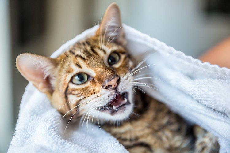 Trimming cat nails