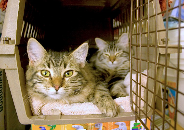 Cat scared of vet