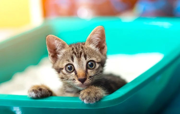 Photo of really cute kitten looking up at the viewer from within a green litter box.