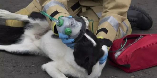 Oxygen Masks, Smokey Paws