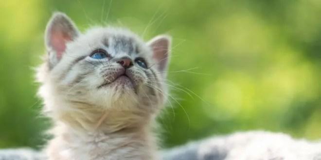 Vets, cats