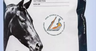 Equine, Horse Feed