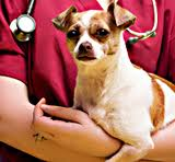 How safe are my vet's anesthesia practices?