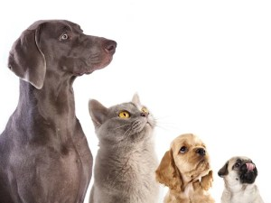 犬と猫の相性