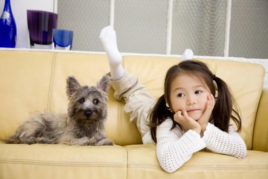 部屋の乾燥で犬が乾燥肌になる