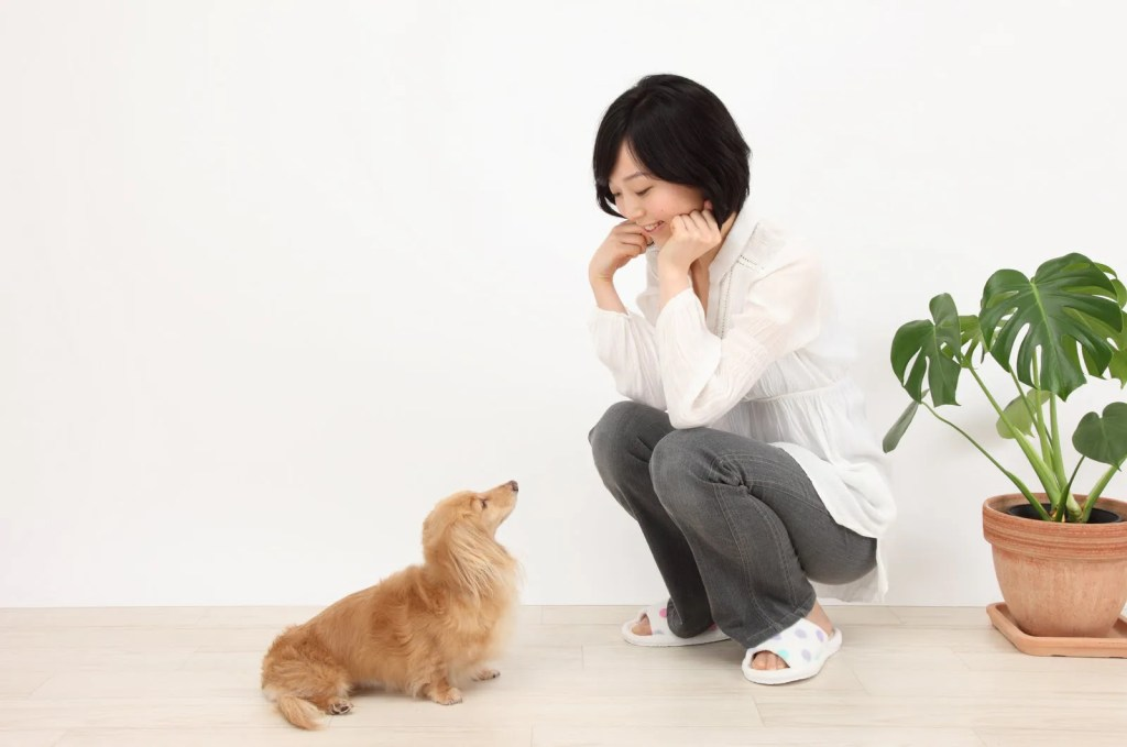 子犬のしつけマズルコントロール