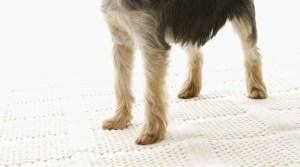 犬の爪切り「狼爪」に注意