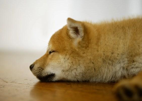 犬の膿皮症ってどんな症状