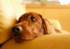 知っておきたい犬の皮膚病と薬について