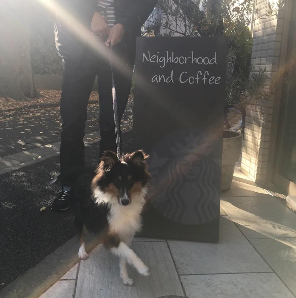 スタバ代沢5丁目店 犬専用
