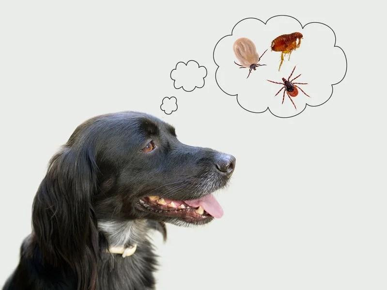春に気を付けたい犬の寄生虫